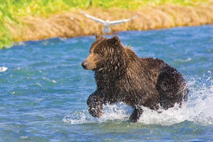 22 Tage Alaska & Yukon Highlights Campingreise