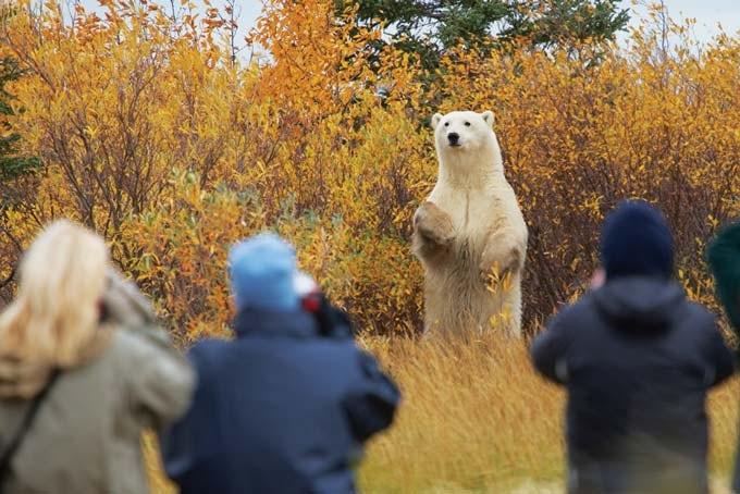 7 Tage Hudson Bay Odyssey Nanuk Lodge - Polarbären und Nordlichter